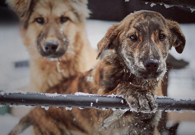 Spenden-Marathon für Tiere von Tierschutz-Shop